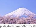 일본의 봄 후지산과 벚꽃 59768539