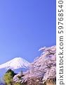 일본의 봄 후지산과 벚꽃 59768540
