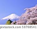 일본의 봄 후지산과 벚꽃 59768541