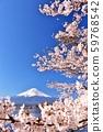 일본의 봄 후지산과 벚꽃 59768542