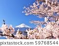 일본의 봄 후지산과 벚꽃 59768544