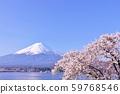 일본의 봄 후지산과 벚꽃 59768546