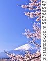 일본의 봄 후지산과 벚꽃 59768547