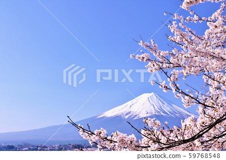 ฤดูใบไม้ผลิฟูจิในญี่ปุ่นและดอกซากุระ 59768548