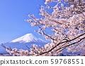 일본의 봄 후지산과 벚꽃 59768551