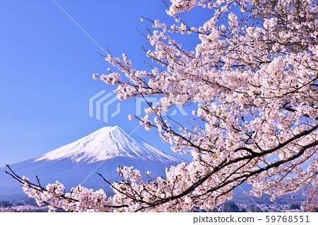 ฤดูใบไม้ผลิฟูจิในญี่ปุ่นและดอกซากุระ 59768551