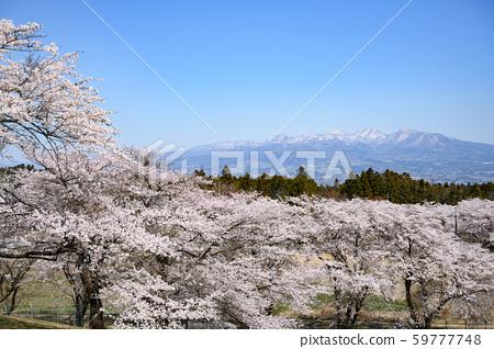 Sakura and Mt. Akagi 59777748