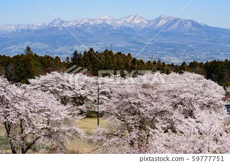 櫻花和赤城山 59777751