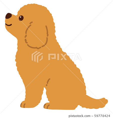 Sitting toy poodle no outline 59778424
