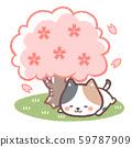Hanami calico cat 59787909
