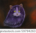 Purple Angora cat with yellow eyes and thick fur 59794263