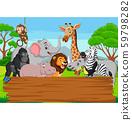 Cartoon wild animal with blank board in the jungle 59798282
