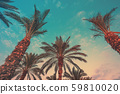 A row of tropical palm trees against a sunset sky 59810020