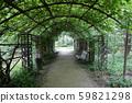 Wild grape tunnel in the city park 59821298