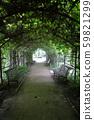Wild grape tunnel in the city park 59821299