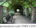 Wild grape tunnel in the city park 59821300
