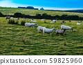 Landscape in Northern Ireland 59825960