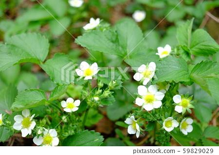 Flower garden 59829029