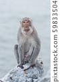 Monkey sitting on the rock watching sea 59833504