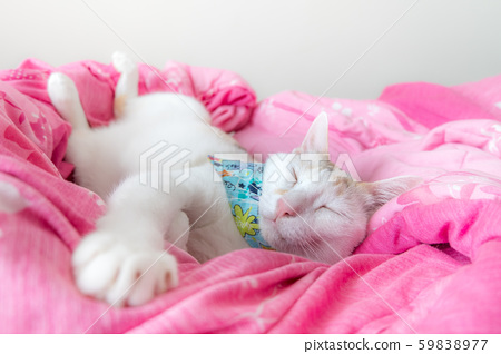 The calico cat sleeps comfortably on the pink duvet. 59838977