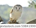 男人猫头鹰 59841999