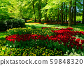 fresh lawn with flowers 59848320