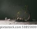 Quail Easter eggs in nest 59855600