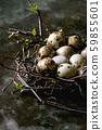 Quail Easter eggs in nest 59855601