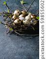 Quail Easter eggs in nest 59855602