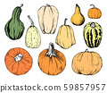 Hand drawn pumpkin set 59857957