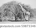 in south africa     wildlife    reserve and   59873346