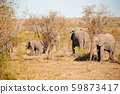 in south africa     wildlife  nature  reserve and  59873417