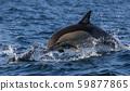 海豚南非沙丁鱼奔跑 59877865