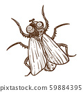 African insect, tsetse fly isolated sketch, flying insect or bug 59884395