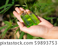 Hand holding a glass bottle with CBD oil and cannabis leaf at the background 59893753