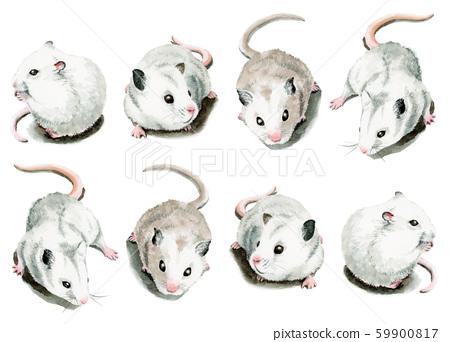 8隻白色的老鼠畫水彩 59900817