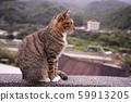 고양이 59913205
