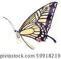 燕尾蝴蝶 59918219