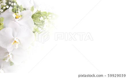 배경 - 꽃 - 난초 - 흰색 59929039