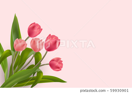 Beautiful Realistic Red and Pink Tulips flower placed on soft background with copy-space for lettering. Creative and Clean design in EPS10 vector illustration. 59930901