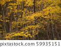 ปลายฤดูใบไม้ร่วงป่าต้นไม้ 59935151