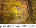 ต้นไม้ในฤดูใบไม้ร่วงเส้นทางเล็ก ๆ ในป่า 59935152