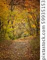 ต้นไม้ในฤดูใบไม้ร่วงเส้นทางเล็ก ๆ ในป่า 59935153