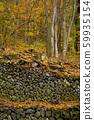 ป่าฤดูใบไม้ร่วงหลุมอากาศเย็น 59935154