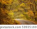 ต้นไม้ในฤดูใบไม้ร่วงเส้นทางเล็ก ๆ ในป่า 59935169