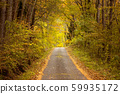ต้นไม้ในฤดูใบไม้ร่วงเส้นทางเล็ก ๆ ในป่า 59935172