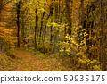 ต้นไม้ในฤดูใบไม้ร่วงเส้นทางเล็ก ๆ ในป่า 59935175