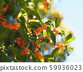 盛開的鮮花盛開 59936023
