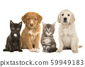 Group of young pets two puppies and two cats 59949183