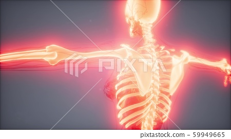 Transparent Human Body with Visible Bones 59949665